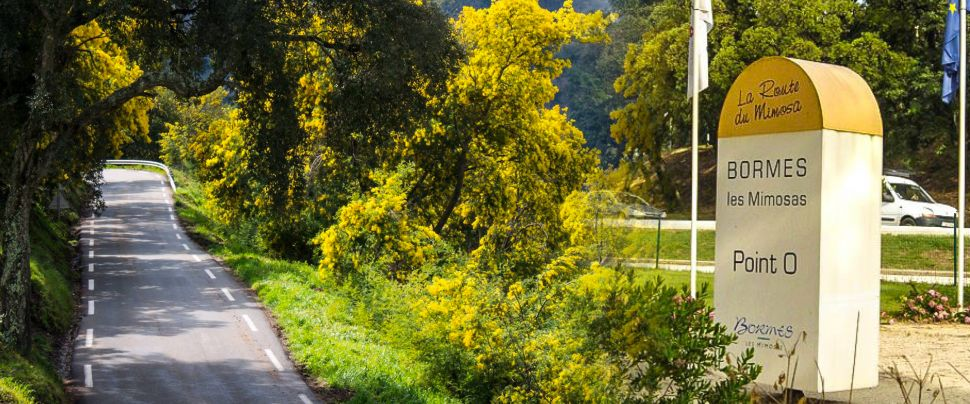 road of mimosa